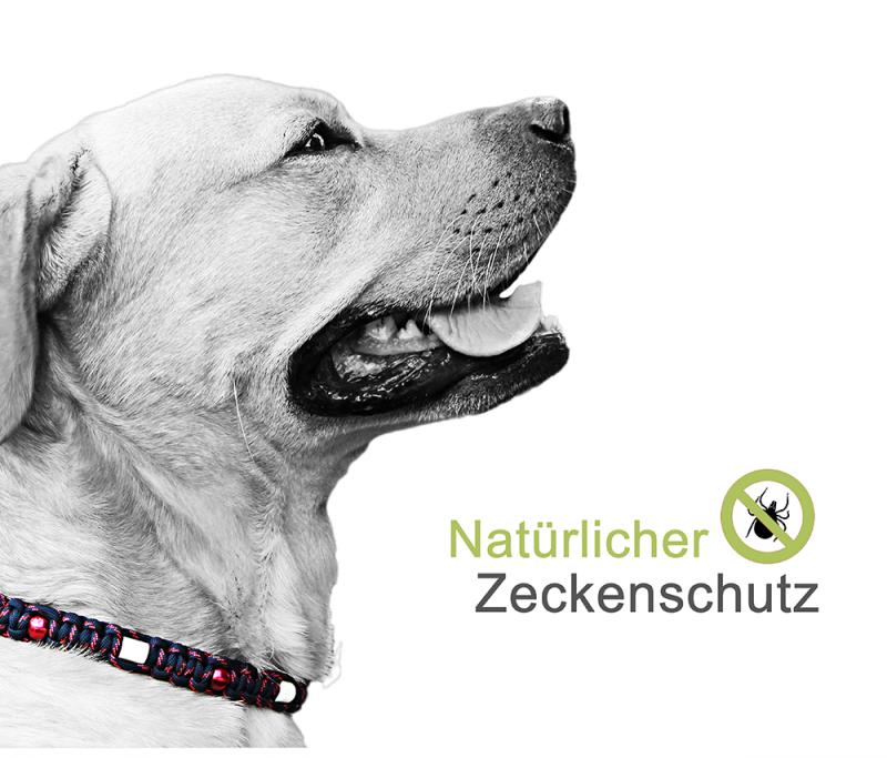 media/image/Zeckenhalsband-shop-banner-2-1-NEUHPyPO05HV18Mb.png