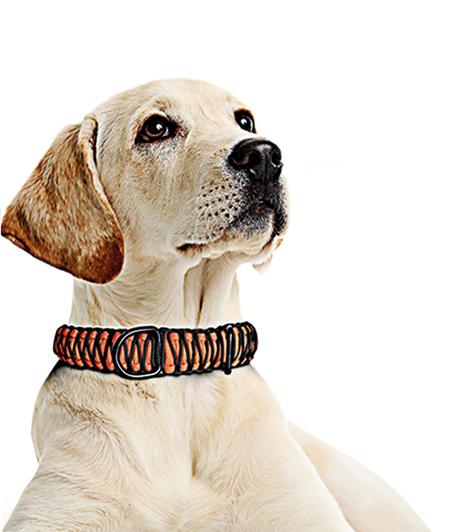 Hundehalsbänder